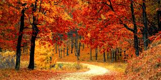 This image has an empty alt attribute; its file name is fall-image.jpg